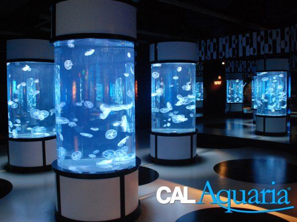 calaquaria-clean